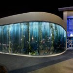 Night view of the Giant Kelp Forest image in glass that adorns the front of the Aquarium of the Pacific in Long Beach California. The 2400 megapixel kelp forest scene was photographed by underwater imaging specialist Jim Hellemn at San Clemente Island.