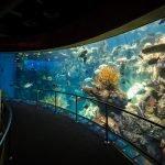 Aquarium of the Pacific Long Beach CA4